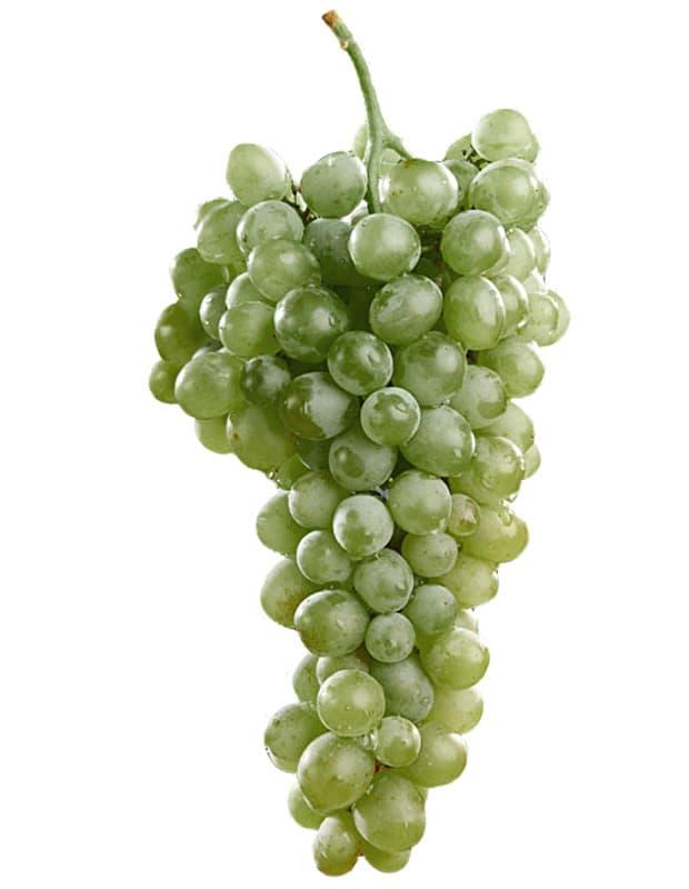 uva blanca chardonnay