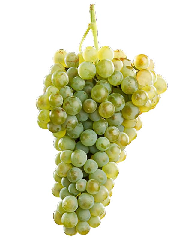 uva blanca verdejo
